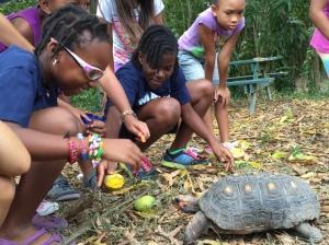 tortoise races